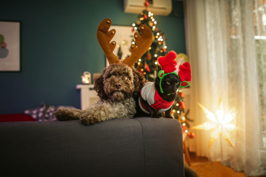 Holiday-Tips-for-Pets-Heritage-Animal-Hospital-Maple-Grove